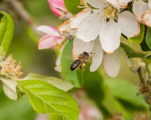 beekeepers can get an early warning system